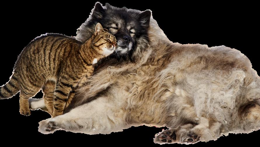 Kot i pies na białym tle, przytulające się