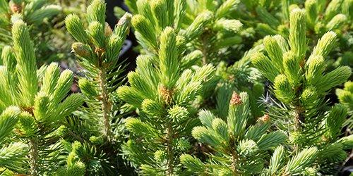 młode zielone drzewa