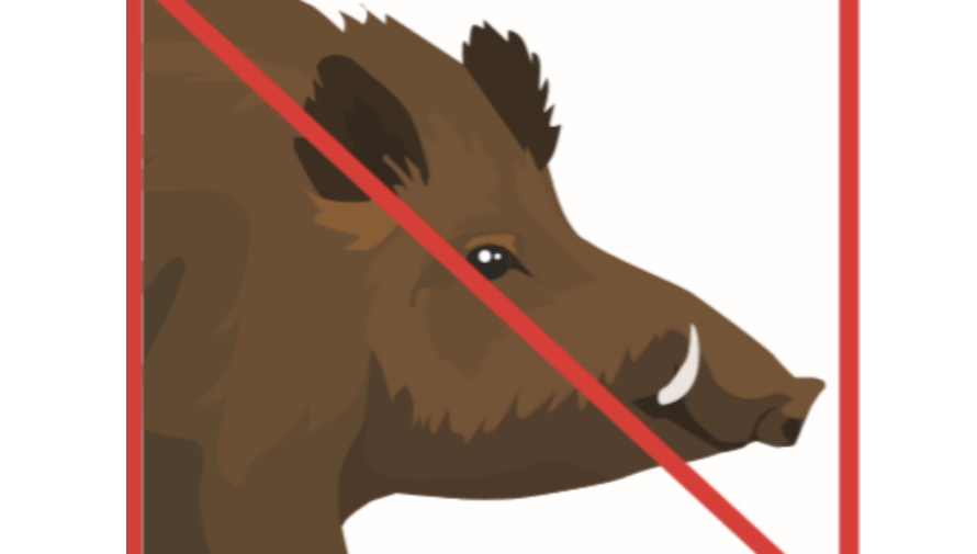Grafika z przekreślonym dzikiem, napis Uwaga całkowity zakaz dokarmiania dzików